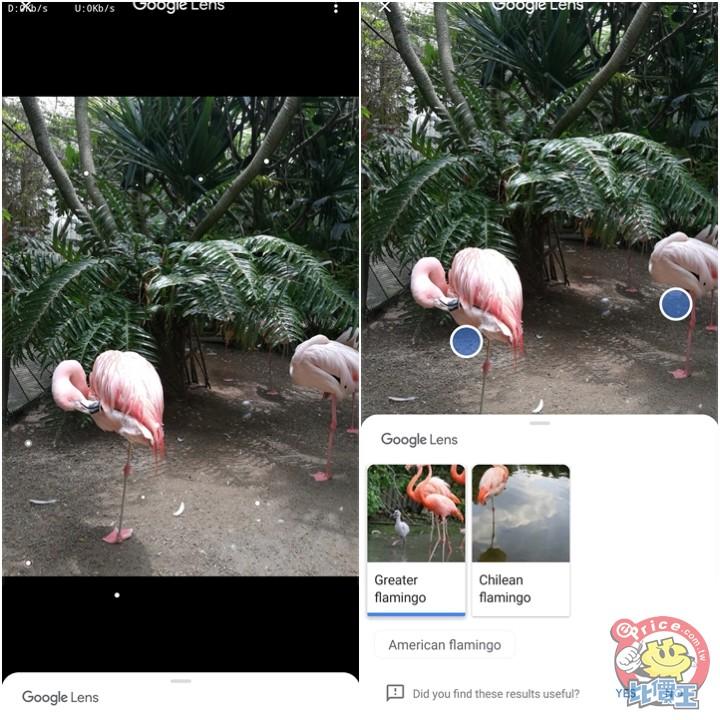 【小技巧】教你啟用谷歌相簿內的 Google Lens 智慧鏡頭功能 - 6